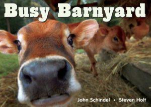 busy-barnyard